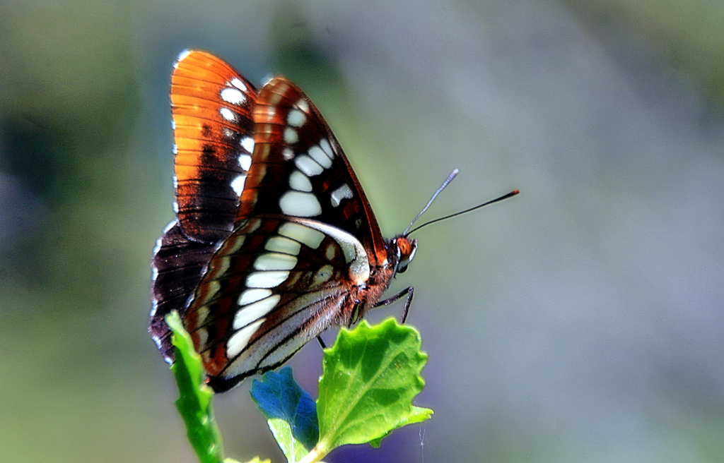 Change Direction Gracefully Like The Butterfly