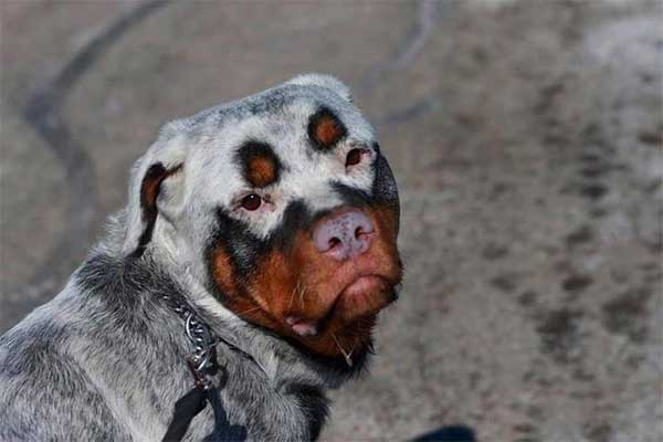 Unique Dog Markings Help Explain Why Storytelling In Marketing Is Important